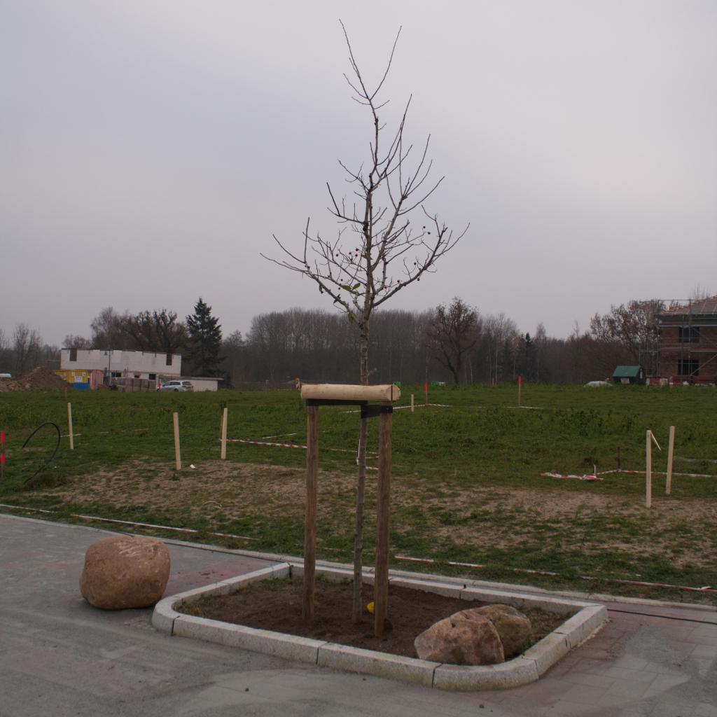 Ein Baum vor dem Haus